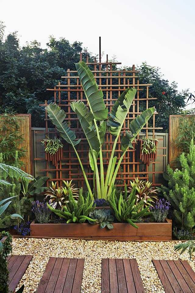 Use Bamboo And Other Timbers Combined With Palms To Create A Tropical  Feature For Your Front