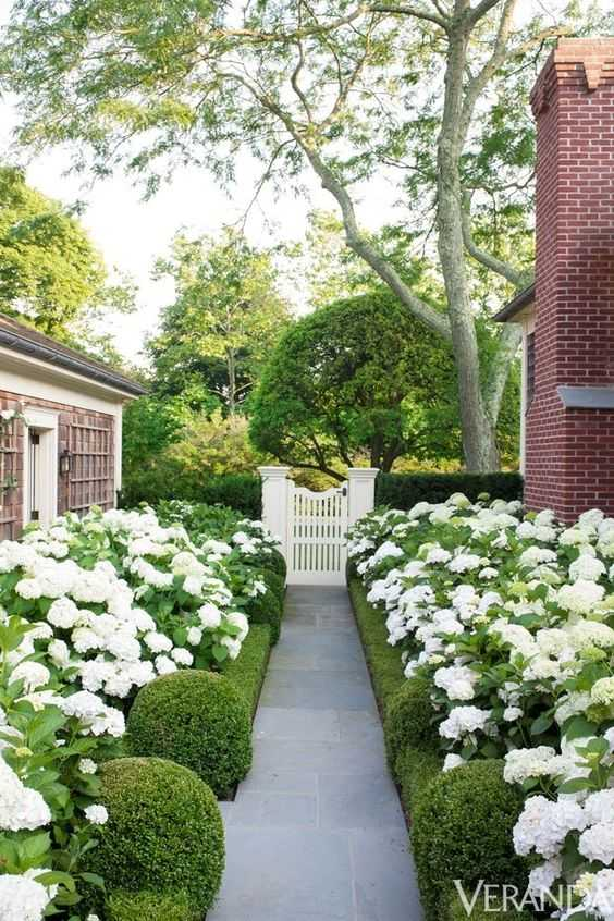 Line your pathway with hydrangeas and manicured hedges for a sophisticated aesthetic. Via Veranda