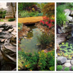 rain garden design ideas