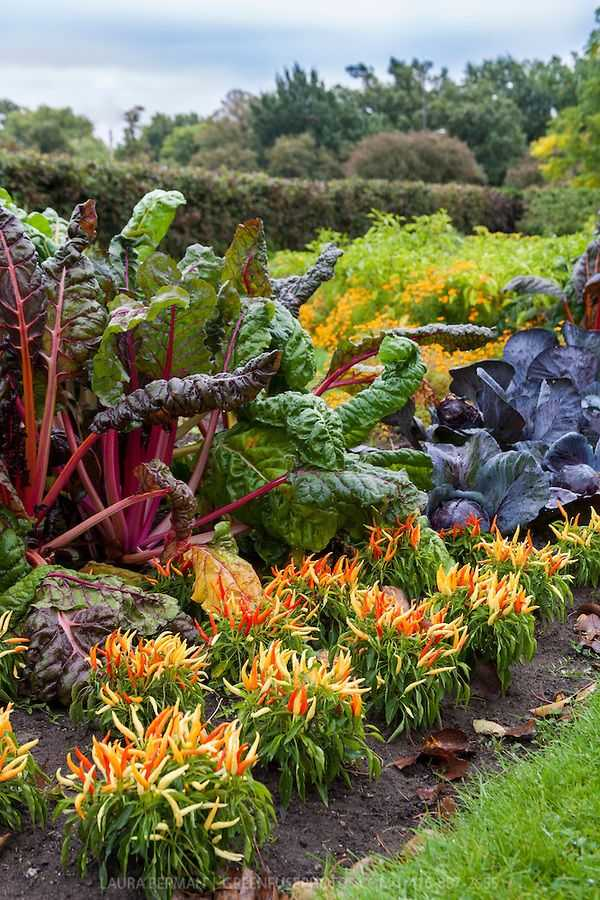 vegetable garden design12