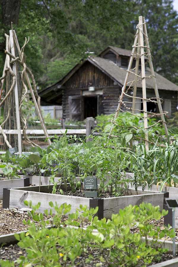 vegetable garden design15