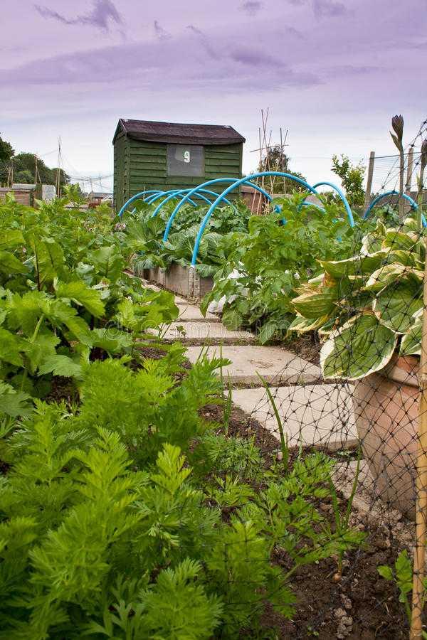vegetable garden design16