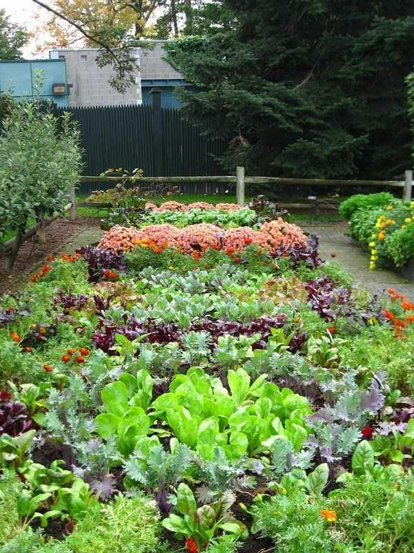 vegetable garden design21