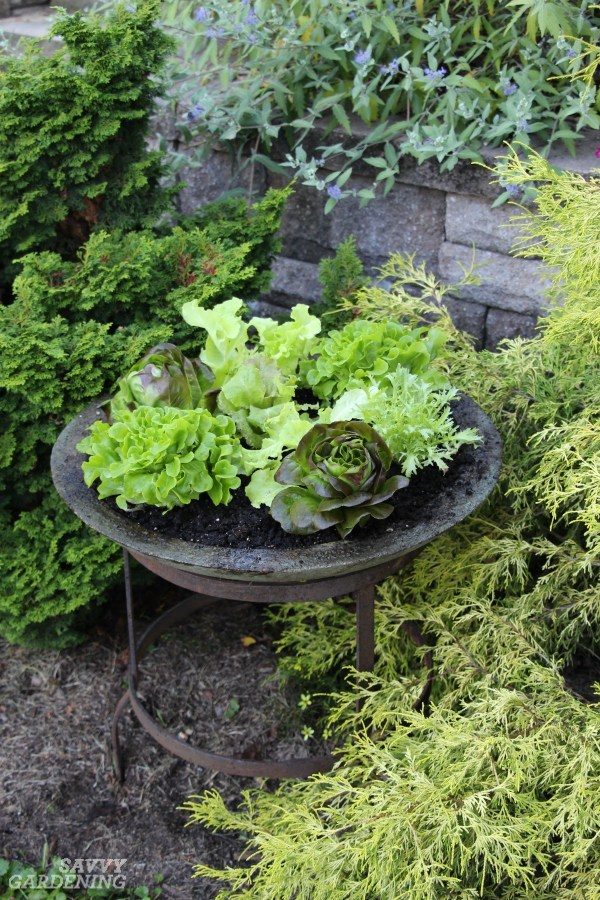 vegetable garden design30