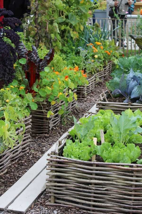 vegetable garden design8